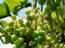Casavecchia Wine Festival, per festeggiare il vino doc di Pontelatone (Caserta)
