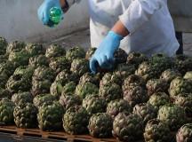 """Il """"Carciofo di Paestum IGP"""" protagonista al Fruit Logistica di Berlino"""