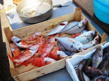 """Dal 2 al 4 giugno 2017 aL  """"Campo dei Rocchi"""" A Castellabate, la tradizionale """"Festa del Pescato di Paranza"""""""